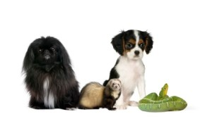 Group of pet, reptile,ferret,dog,
