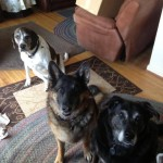 Buddy,Roxy and Misa
