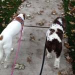 Cassia and Coco