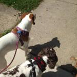 Cassie & Coco
