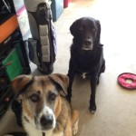 Cooper ( black) & Eddie McCoullouch