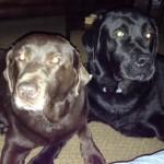 Draper dogs