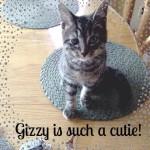 Gizzy