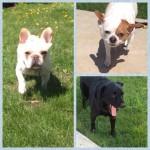 Kourt, Kole, Diego and Moxie 3