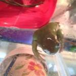 Martell frog