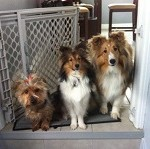 Missy, Bailey and Rory