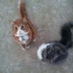 Quinton cats 6.2013
