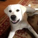Sawyer, Watson2 6.13.2013