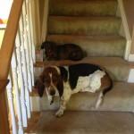 Smith, Lola and Izzy 6.8.2013