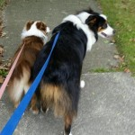 Thomas, Riggs and Lacey walking