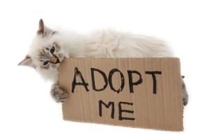 adoption iStock_000022596095XSmall