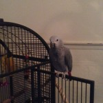 barber bird 2