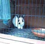 borkman bunny