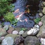 craigie fish