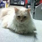 dolgoff cats1