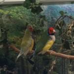 kahn birds1