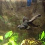 kreusch fish