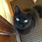 martin cat