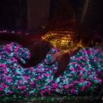mccoy fish