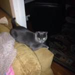 merrill cat 1