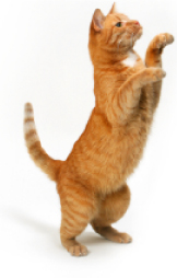 news-cat