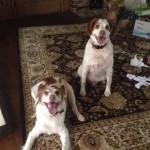 rappold pups