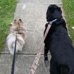 sullivan dogs