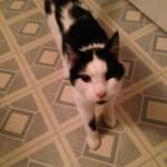 tucker cat