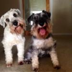 zion pups