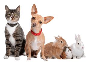 austin-pet-sitting1 (1)