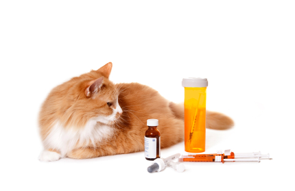 Cat Looking at Medication